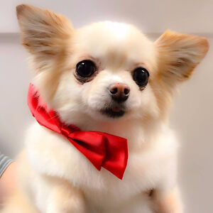 10% OFF Personalized and Positive Dog, Cat and Horse Grooming!!