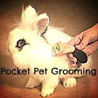 Pocket Pet Grooming