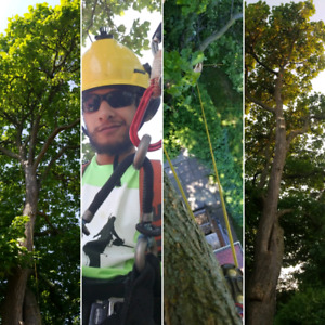 TREES, PRUNING, REMOVALS, LOT CLEANING ,AFFORDABLE,FULLY INSURED