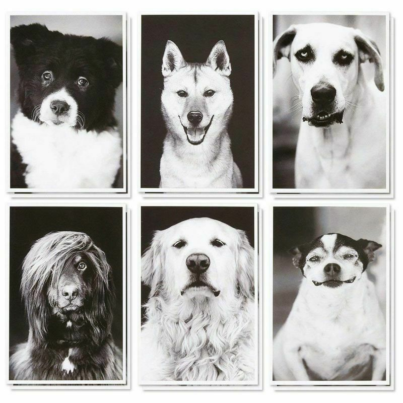 36 Pack Blank Note Cards -  All Occasion Real Photograph Rescue Dogs w/Envelopes