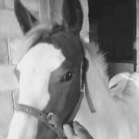 Paint filly
