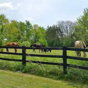 ME TIME:  Horses available for riding!