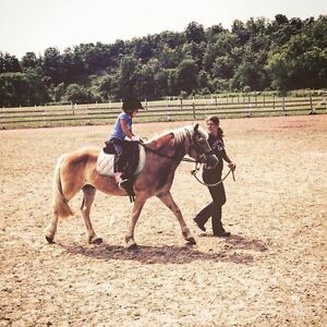 English and/or Western Horse Riding Lessons London Ontario image 2