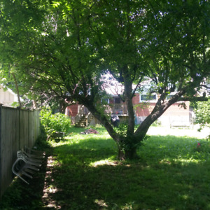 TREE GUY Trimming, Removals. Hedges and more. Gr Hamilton Area.