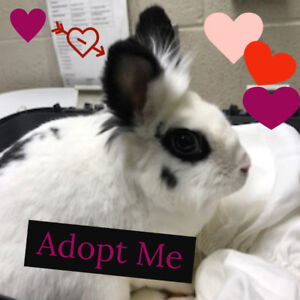 Muffin Top - Bunny Available for Adoption