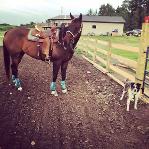 Beginner to Advanced riding lessons