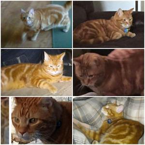 lost cat !!! strathcona/Sherwood park/summerside