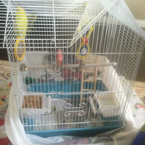 Budgies for rehoming - male and female