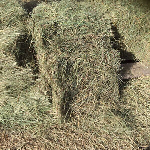 Small square bales 'horse hay'