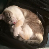 FREE 2-Year-old Female Cat