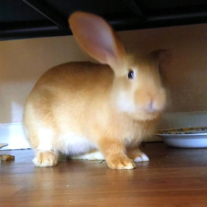 2 bunnies in need of home.