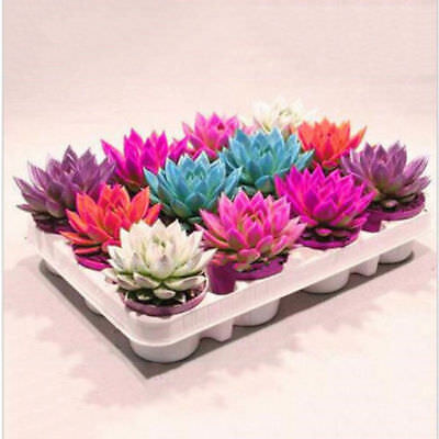Succulent-Seeds-Soft-Seeds-Mix-Color-Flowering-Succulents-Cactus-Combsh-100Pc for sale  Shipping to Canada