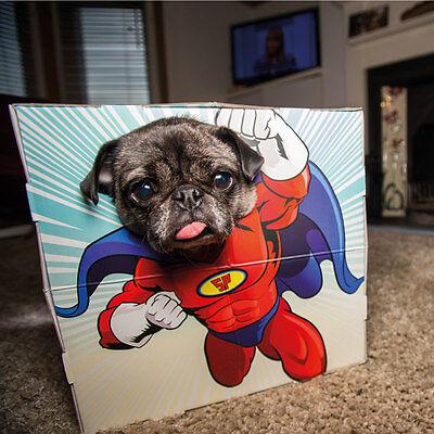 Animal Dog/Cat Pet Photobooth Superhero Novelty Fun Party Costume Frame - Party Animal Kostüm Hunde