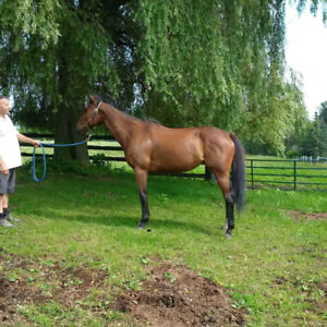 Rehabilitated Thoroughbreds for Sale
