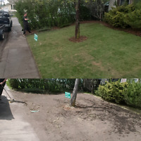 SOD CUTTING, REPLACE THAT OLD LAWN