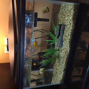 Fish Tank w/ fish and other stuff