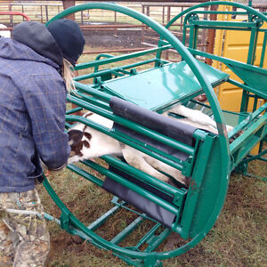 LAKELAND CALF TIPPING TABLE CHUTE Moose Jaw Regina Area image 2