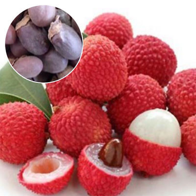 10-Pcs-Lychee-Tree-Seeds-Outdoor-Fruit-Tree-Seeds-for-Home-Garden-Planting 10-
