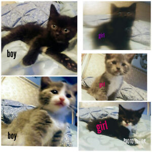 Kittens needing new home.