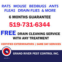 Affordable & Reliable Pest Control Services in KW