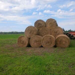 Horse and Cattle Hay in Tomslake