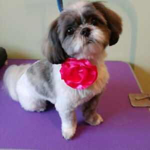 9 years experienced pet groomer and sitter, one on one, all pets