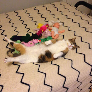 Free adult cat female