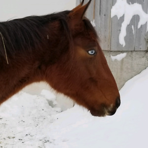 Cheval a vendre/horse for sale