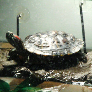 Tucker the Turtle and Tank
