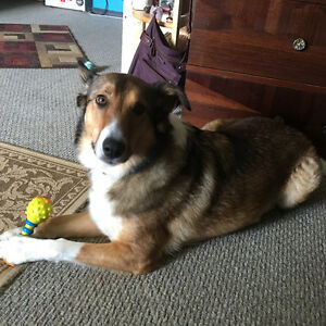 PET SITTING WHILE YOU GO ON VACATIONS Kitchener / Waterloo Kitchener Area image 8