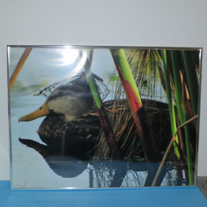 Framed Nature Photography