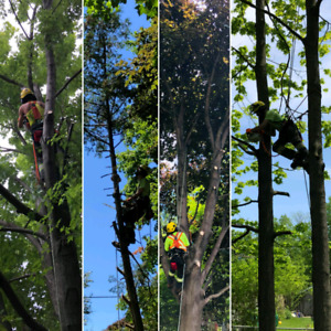 TREE REMOVAL, PRUNING, -STORM DAMAGE -FULLY INSURED 647-390-9223