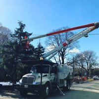 Best Rate for Tree Care Services in Toronto!