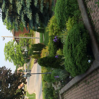 Bright 3000 SQ. FT. Detached, Clearview home for rent QEW / 403