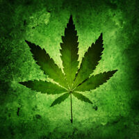 Are you an expert on growing Cannibis?