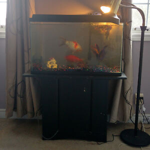 30 Gallon Fish tank with all accessories