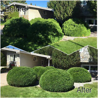 SPRING CLEANUP•TREE CARE•HEDGE TRIMMING•STUMP REMOVAL•TREE REMOV