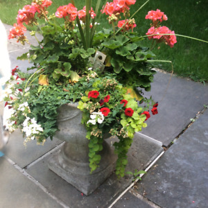 2 lovely cast cement flower urns, flowers included