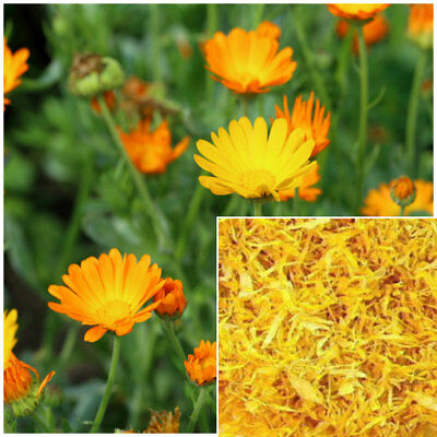 Calendula Petals, Organic, Soap making supplies, herbal extracts, teas, salves.