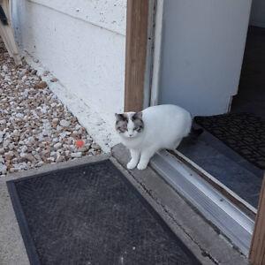 Female Cat missing