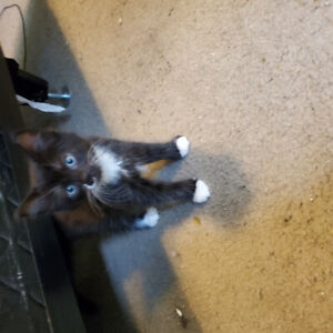 1 female kitten for sale to good home!