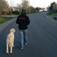 """Is your dog pulling on leash or will not """"leave it"""" when asked?"""