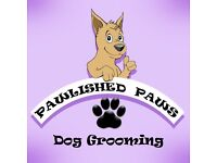 Dog Grooming - Irvine. Bath & brush from £10