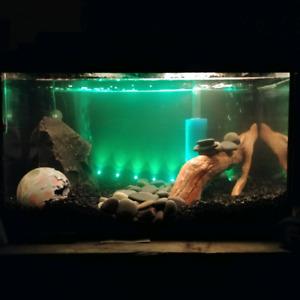 fish tanks wanted!!