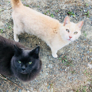 Two lovely senior cats, looking for a cozy home to retire to..