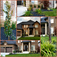 Landscaping Services/Small Tree Removal/Landscape Design/Soding