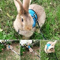 9 month old flemish giant buck for sale with cage