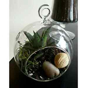 Open House, succulents, lucky bamboo, bath bombs, air plants Cambridge Kitchener Area image 5