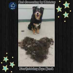 January Special ! Professional dog and cat grooming  Cambridge Kitchener Area image 7