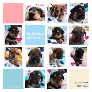 Greater Edmonton Animal Rescue Flowers for Fur-iends